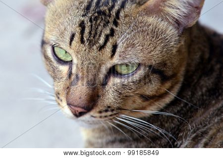 Close-up view of cat's eye (Selective focus - Animal lover background)