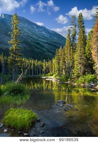 Tranquil Mountain Stream In Glacier National Park