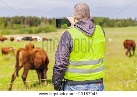 Farmer with tablet PC near the cows at pasture