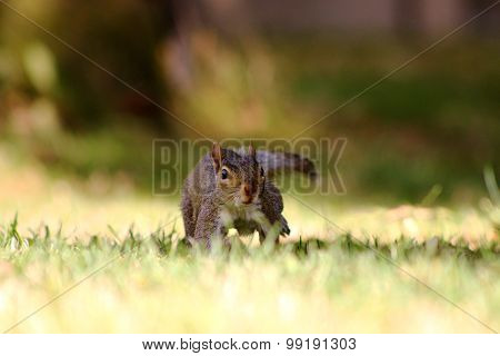 Squirrel in shade