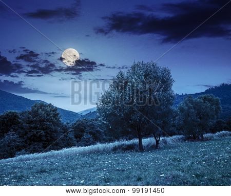 Meadow Near The Forest In Mountains At Night