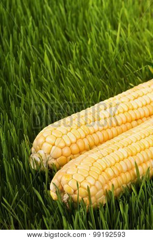 Corn On The Green Grass