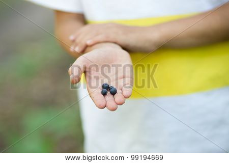 Freshly Picked Wild Blueberries In Kid's Hands