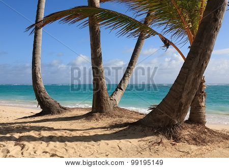 Curved palm on the morning ocean