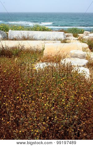 Flowers in Caesarea's ruins