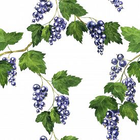 image of bine  - seamless pattern with branche of black currants with berries and green leaves drawing by watercolor - JPG