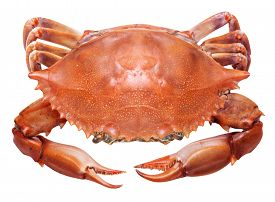 stock photo of cooked crab  - Cooked crab on a white background - JPG