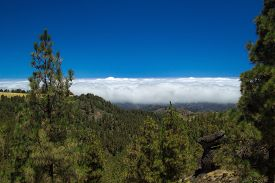 picture of burro  - Inland Central Gran Canaria Las Cumbres the highest areas of the islands view over treetops towards Panza de Burro Donkey Belly cloud cover almost always present at the north of the Canary Islands  - JPG
