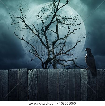 Bird Stand On Wood Fence On Spooky Tree With Moon, Halloween Background
