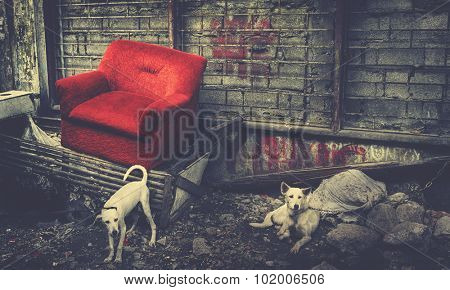 Abandoned Couch in Manila Old Modern Concept
