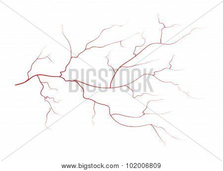 Set Of Human Eye Veins, Red Blood Vessels, Blood System.  Vector Illustration Isolated On White Back