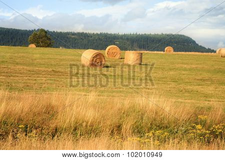 Hay harvest on meadow