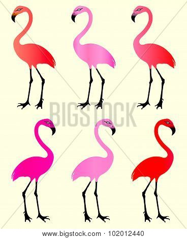 Flamingo. 6 Color Variations.