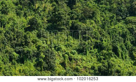 Rain Forest In Myanmar