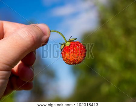 The nature vegetable strawberry object.