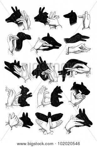 Shadow hand puppets - Reindeer, chamois, sheep, camel, pig, goose, wolf, goat, elephant, hare, bear, ox, dog, butterfly, ass, vintage engraved illustration. Trousset encyclopedia (1886 - 1891).