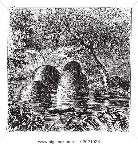 Lodges and dams built by beavers vintage engraving. Old engraved illustration of beaver's house and dam. Trousset encyclopedia (1886 - 1891).