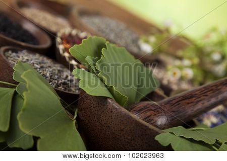 Ginkgo,maidenhair tree, Natural remedy