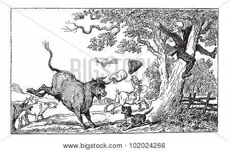 Old engraved illustration of Dr. Syntax chased by a bull, 1874. Created  by Thomas Rowlandson. Le Magasin Pittoresque - 1874.