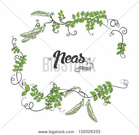 Vector with cartoon peas and calligraphic elements.
