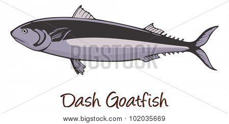Dash-and-dot Goatfish, Color Illustration