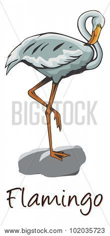 Flamingo Perched on a Rock, Color Illustration