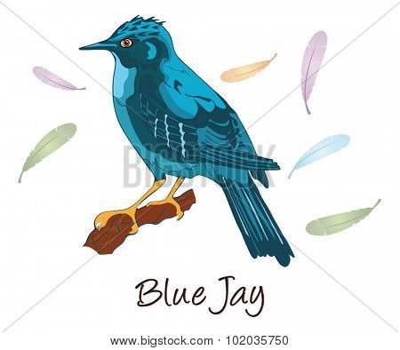 Blue Jay, Perched on a Branch, Color Illustration