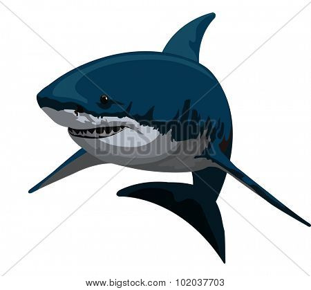 Shark, Blue and Gray, vector illustration