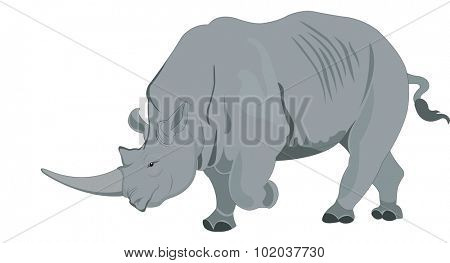 Rhinoceros or Rhinocerotidae, Gray, vector illustration