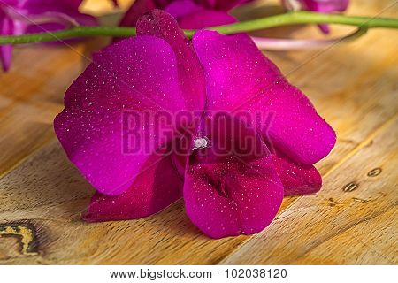 Violet Orchid With Water Drop On Wooden Background