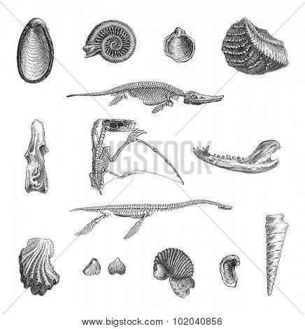 Jurrasic Fauna, showing various fossils, vintage engraved illustration. Dictionary of Words and Things - Larive and Fleury - 1895