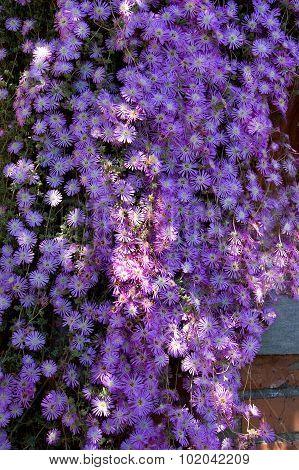 Decorative bougainvillea flowers