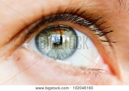 Close-up macro female eye