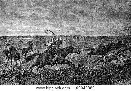 The Gauchos of the Pampas. Their bolas will wrap around the neck bronco, vintage engraved illustration. Journal des Voyages, Travel Journal, (1879-80).