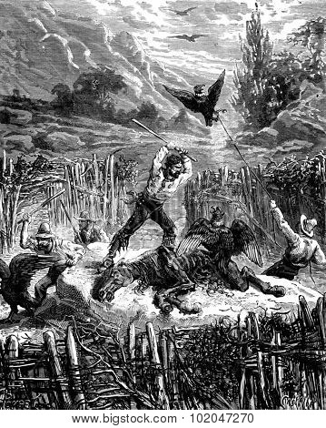 Hunting condors. They kill birds with sticks, vintage engraved illustration. Journal des Voyages, Travel Journal, (1879-80).