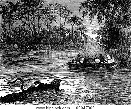 Clinging to the floating corpse, one of the jaguars. vintage engraved illustration. Journal des Voyages, Travel Journal, (1879-80).