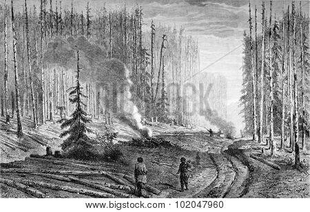 Exploitation of a forest, vintage engraved illustration. Le Tour du Monde, Travel Journal, (1872).