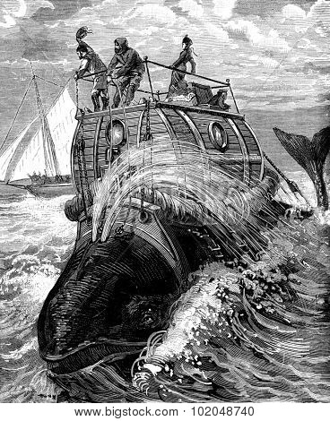 Frontispiece to travel back whale story illustrates, published by the newspaper Recreation, vintage engraved illustration. Journal des Voyages, Travel Journal, (1879-80).