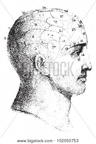 Type cranial given by Spurzheim in profile, vintage engraved illustration. Usual Medicine Dictionary - Paul Labarthe - 1885.
