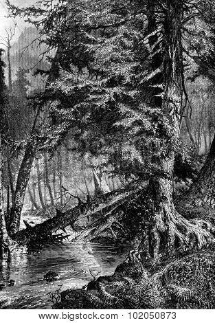 The stream of mockingbirds. Do perch, vintage engraved illustration. Journal des Voyages, Travel Journal, (1880-81).