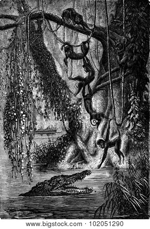 The spider monkeys. Gators await the right moment to snap the last, vintage engraved illustration. Journal des Voyages, Travel Journal, (1880-81).