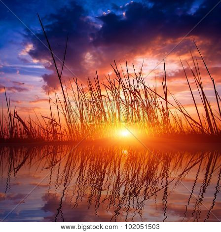 scene with dry grass on sunset sky background