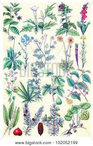 Herbs, flowers and plant, vintage engraved illustration. La Vie dans la nature, 1890.