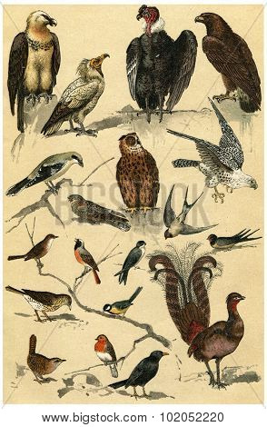 Birds of prey, vintage engraved illustration. La Vie dans la nature, 1890.