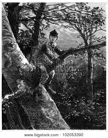 The Tour de France a small Parisian, He firmly establishes the first fork of the tree, vintage engraved illustration. Journal des Voyage, Travel Journal, (1880-81).