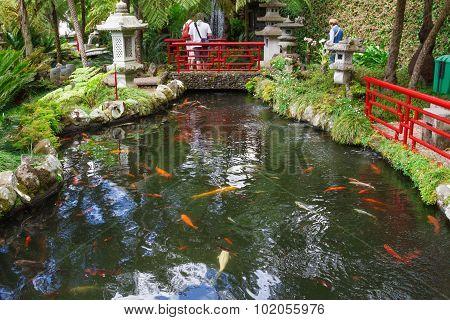 Pond with Koi Carp in Tropical Garden, Funchal, Madeira Island
