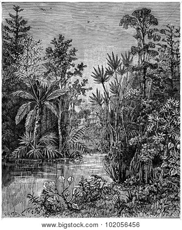 Plant landscape of the Cretaceous period, Bohemia, vintage engraved illustration. Earth before man 1886.