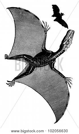 Pterodactyl and bat, vintage engraved illustration. Earth before man - 1886.