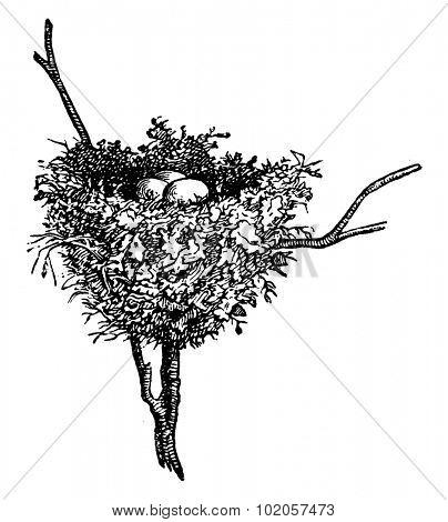 Hummingbird nests, vintage engraved illustration. La Vie dans la nature, 1890.