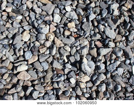 Background Of Gray Stones And Shells On The Shores